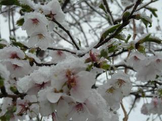'13 Apr. yuki 003.jpg