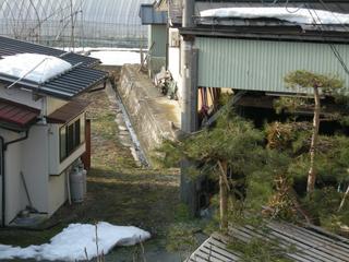 kiji 002.jpg